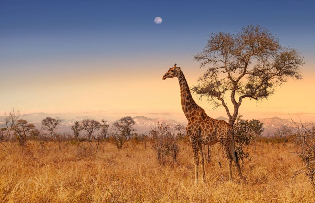 Should you run promotions in South Africa